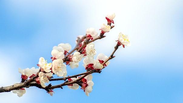 flower-1284096__340cwgriffiniii
